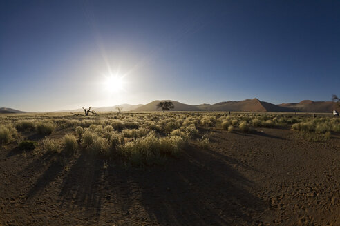Africa, Namibia, Landscape with trees - FOF01023