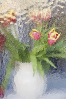 Tulips in a vase seen through milk glass, close up - MBF00832
