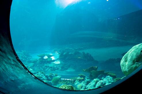 Aquarium - AWDF00011