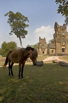 Cambodia, Angkor, Siem Reap, Prasat Suor Prat, Temple and horse - GA00093