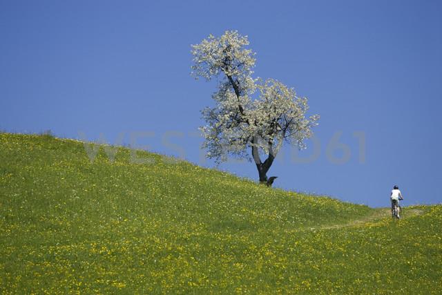 Germany, Bavaria, Oberland, Person mountain biking across flowering meadow, rear view - DSF00093