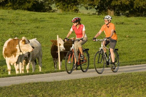 Germany, Bavaria, Oberland, Couple mountain biking, cattle in background - DSF00084