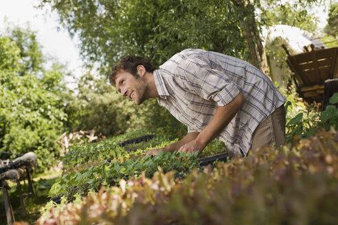 Farmer cultivating seedlings - BMF00416