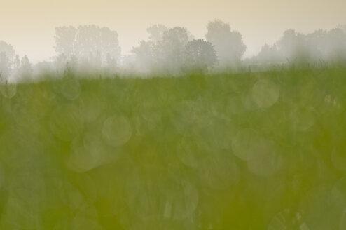 Germany, Misty Landscape - SMF00358