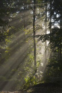 Germany, Baden-Württemberg, Light Rays in Forest - SMF00346