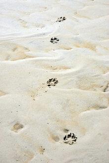Germany, Amrum, Dog Footprints in Sand - AWDF00096
