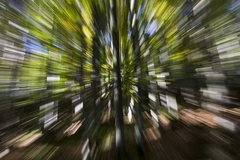 Germany, Bavarian Forest, Trees (Zoom effect) - FOF01167