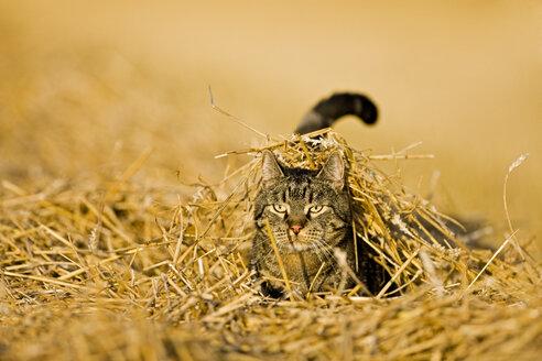 Cat in Stubblefield - FOF01134