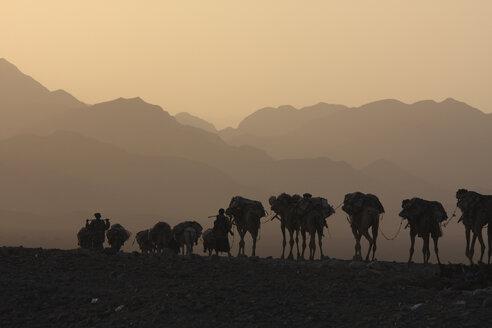 Ezhiopia, Danakil desert, Ahmed Ela, Salt caravan - RM00226