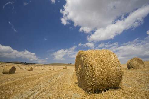Italy, Tuscany, Bales of straw on corn field - FOF01257