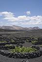 Spain, Lanzarote, La Geria, Vineyard - UM00256