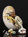 Nautilus and jewellery - AKF00031
