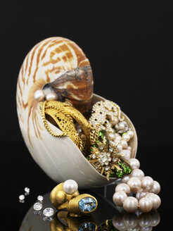 Nautilus and jewellery - AKF00031