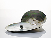 Black pearl on shell - AKF00013