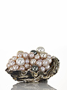 Pearls and black pearls on shell - AKF00004