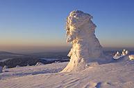 Germany, Saxony-Anhalt, Snowcapped trees - RUEF00080