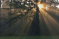 Germany, Bavaria, Sun rays in Forest - RUEF00050