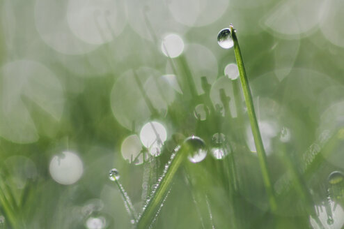 Grass with dew drops, light reflection, Close-up - RUEF00002