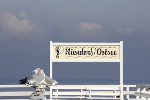 Germany, Baltic Sea, Niendorf, Seagulls sitting on railing - TL00295