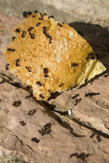 Ants crawling over bread - MUF00759