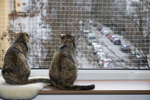 Domestic cats on window sill, safety net, rear view - NHF01100
