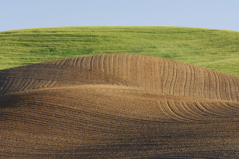 USA, Washington State, Palouse, Field landscape - RUEF00204