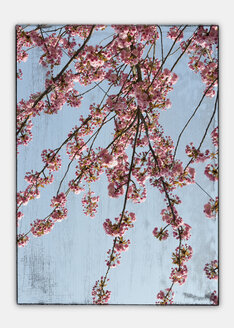 Germany, Stuttgart, Cherry blossom seen through window, collage, close-up - AWD00393