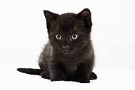 Domestic cat, black kitten, portrait - 11304CS-U