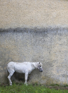 Austria, Horse in front of house wall - WWF01042