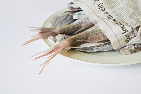 Red Snapper (Lutjanus campechanus) on plate, wrapped in paper - GWF01045