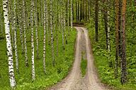 Finland, Birch forest, Track - AC00001