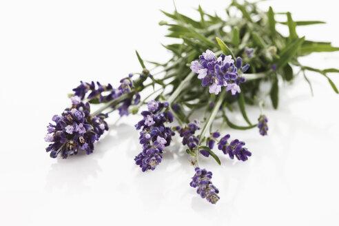 Bunch of lavender (Lavandula angustifolia), elevated view - 11648CS-U