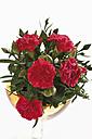 Bunch of Carnations  (Dianthus), close-up - 11669CS-U