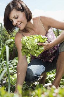 Germany, Bavaria, Woman in garden holding lettuce, smiling, portrait - WESTF13231