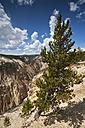USA, Yellowstone Park, Yellowstone Canyon - FOF01862