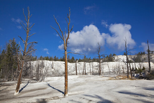 USA, Wyoming, Yellowstone National Park, Landscape - FOF01777