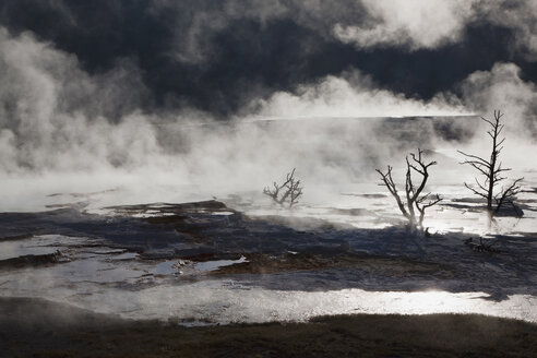 USA, Wyoming, Yellowstone National Park, Mammoth Hot Springs Terrace - FOF01774