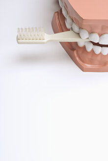 Set of dentures and toothbrush - KJF00069