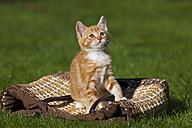 Germany, Bavaria, Ginger kitten sitting on shopping bag, portrait - FOF01976