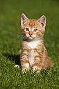 Germany, Bavaria, Ginger kitten sitting in grass, portrait - FOF01967