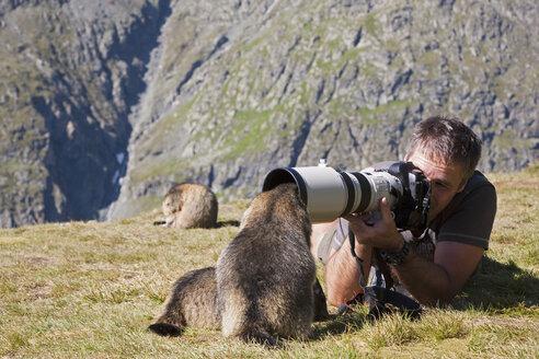 Austria, Grossglockner, Man taking photograph of Alpine Marmots (Marmota marmota) - FOF01937