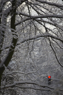 Red light signal in the middle of snow covered branches. - TLF00409