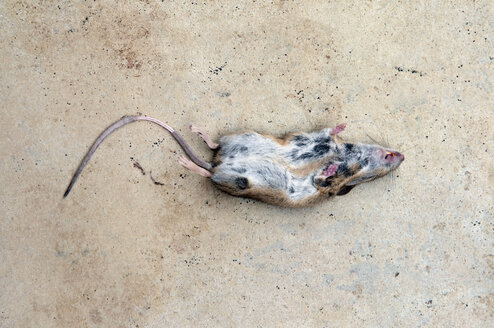 Germany, Baden-Württemberg, Stuttgart, Dead Mouse, elevated view - AWD00443