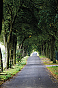 Germany, Country road lined with trees - 12127CS-U