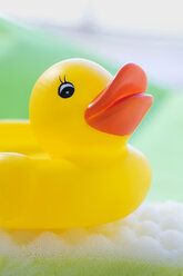 Rubber duck floating on soapsud - SMOF00392
