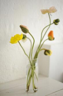 Poppy flowers in vase, close up - COF00129