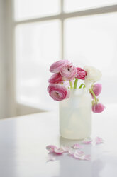 Buttercup flowers in vase, close up - COF00123