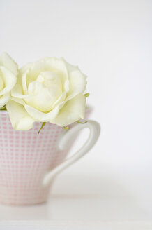 Flower vase with white roses on white background, close up - COF00114
