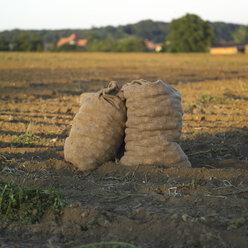 Germany, Hessen, Sack of potatoes in rural field - AKF00164
