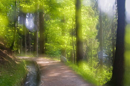 Italy, South Tyrol, Hiking path passing from trees - SMF00613
